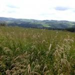 Eifel oder Ardennen – hoch ist es auf jeden Fall